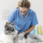 Oferta de avença médico veterinária para a Força Aérea