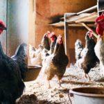 Carreira especial de inspeção veterinária - Governo aprova regime prejudicial para os Médicos Veterinários